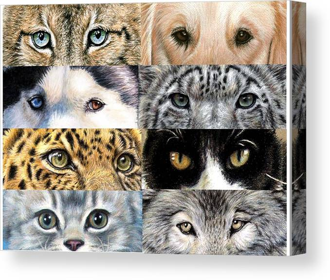Animal Canvas Print featuring the drawing Animal Eyes by Nicole Zeug