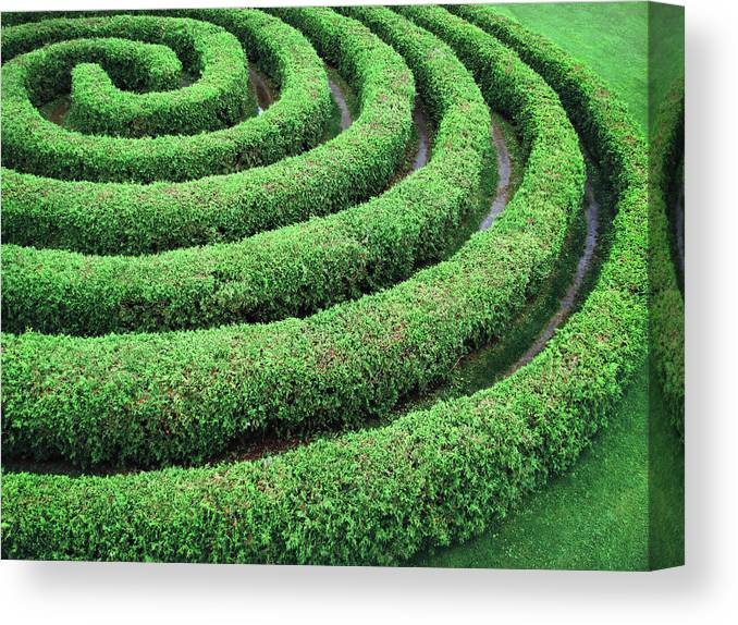 Tranquility Canvas Print featuring the photograph Cedar Maze by Francois Dion