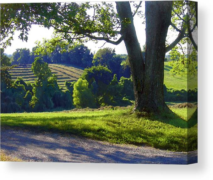 Landscape Canvas Print featuring the photograph Country Landscape by Steve Karol