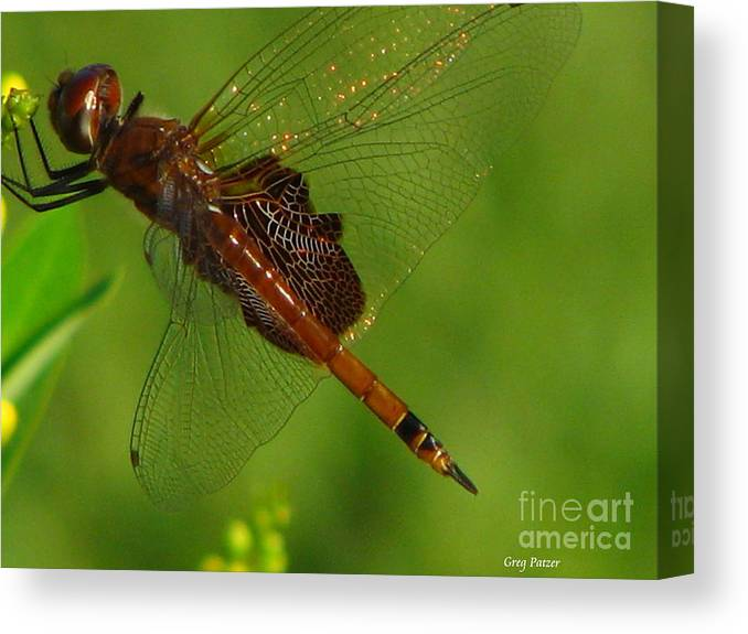 Art For The Wall...patzer Photographydragonfly Canvas Print featuring the photograph Dragonfly Art 2 by Greg Patzer