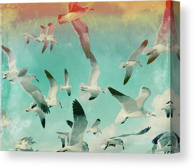 Animal Themes Canvas Print featuring the photograph Flock Of Seagulls, Miami Beach by Michael Sugrue