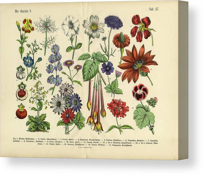 Lantana Canvas Print featuring the digital art Flowers Of The Garden, Victorian by Bauhaus1000