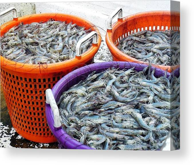 Shrimp Canvas Print featuring the photograph Loaves And Fishes by Patricia Greer