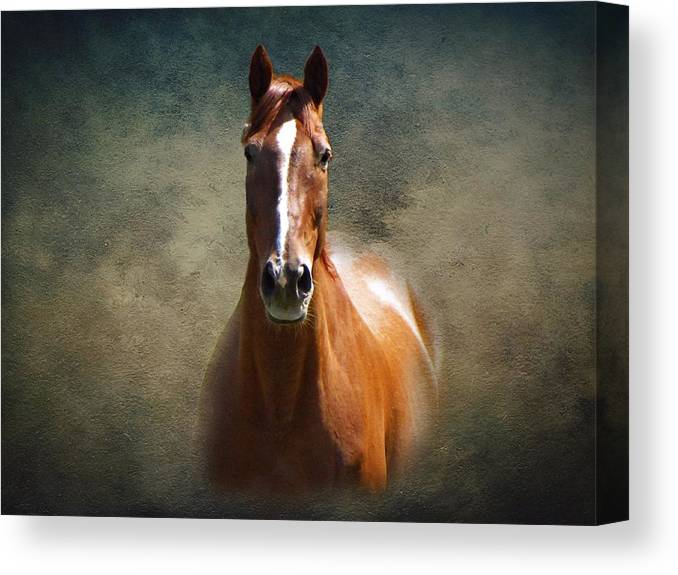 Misty In The Moonlight Canvas Print featuring the photograph Misty In The Moonlight by David Dehner