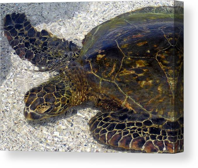 Turtle Canvas Print featuring the photograph Sea Life by Athala Bruckner