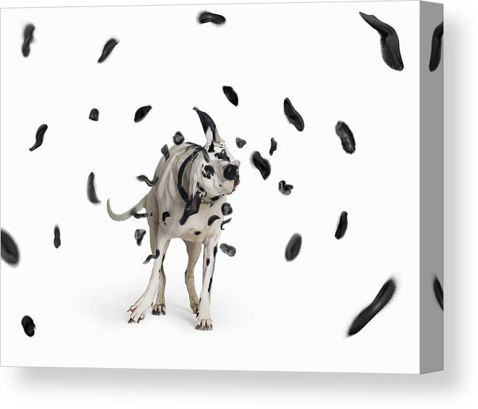 Pets Canvas Print featuring the photograph Shake The Spots Off by Gandee Vasan