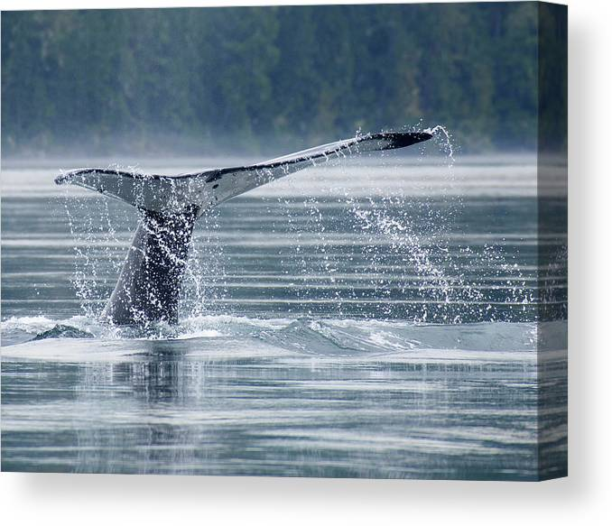 One Animal Canvas Print featuring the photograph Tail Of Humpback Whale by Grant Faint