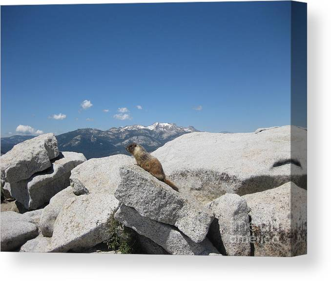 Half Dome Canvas Print featuring the photograph The Resident of Half Dome by AC Hamilton