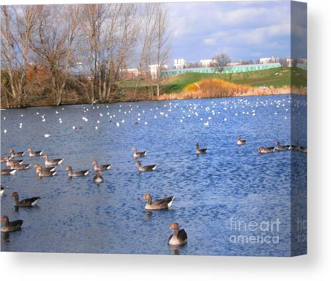 Lake Canvas Print featuring the photograph Wintering Birds - Mayesbrook Park by Mudiama Kammoh