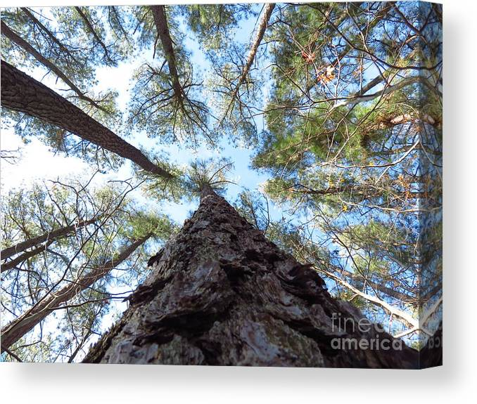 Trees Canvas Print featuring the photograph Looking up by Rrrose Pix
