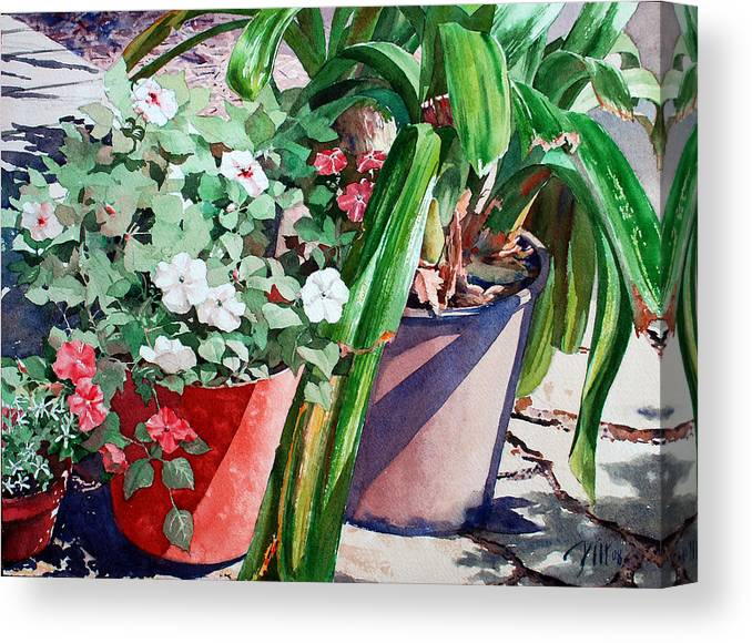 Peter Sit Watercolor Canvas Print featuring the painting Summer Impatiens by Peter Sit