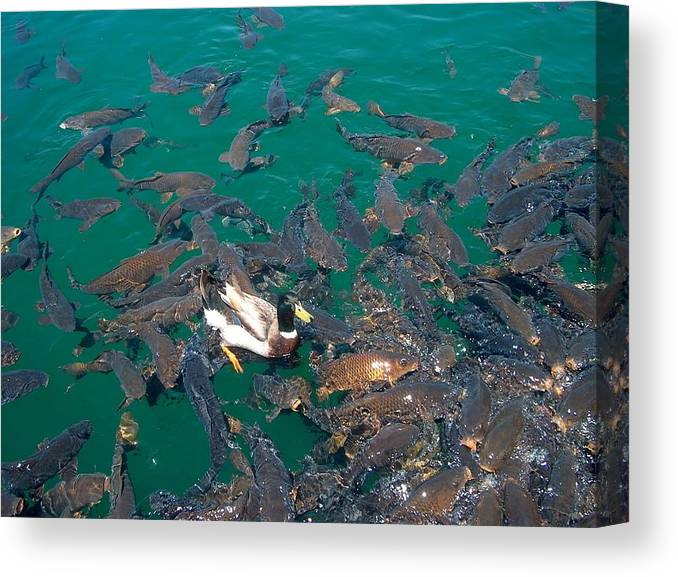 Canvas Print featuring the photograph Duck Walk by Janet Hall