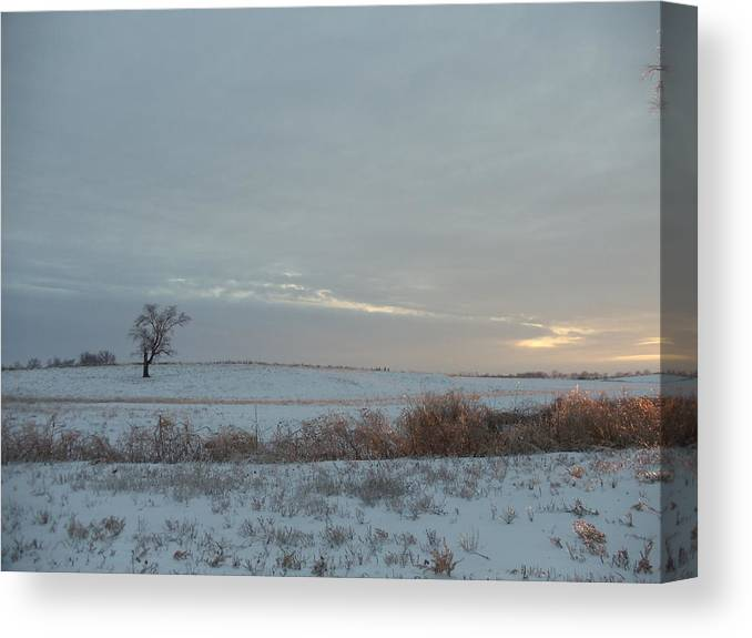 Landscape Canvas Print featuring the photograph Lonesome Tree by David Junod