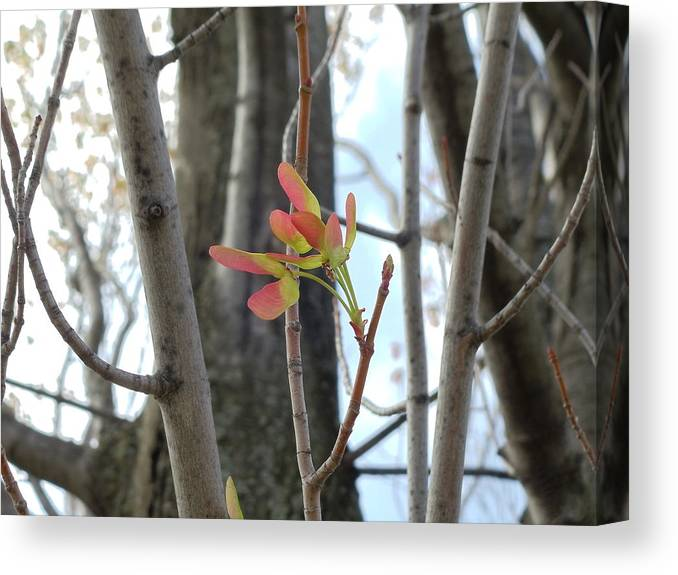 Indiana Canvas Print featuring the photograph Spring Whirligig by Colleen Cornelius