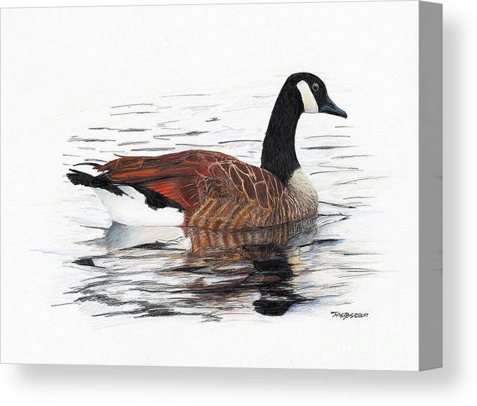 Goose Canvas Print featuring the drawing Annie Belle by Kevin Scott Jacobs