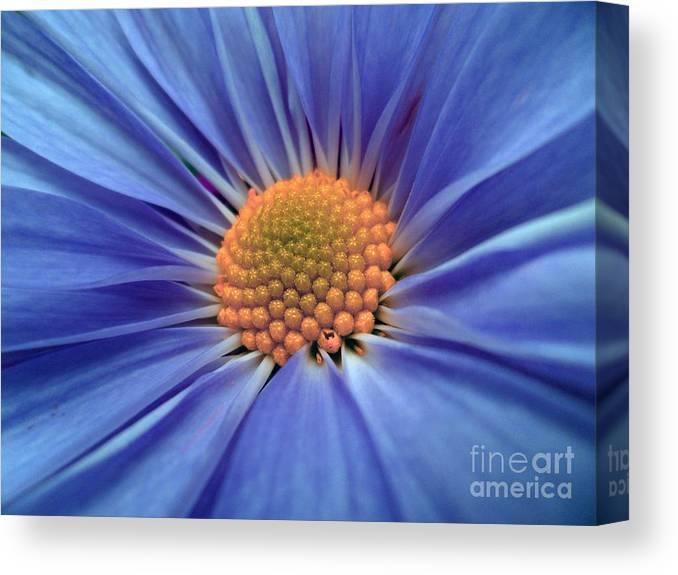 Blue Canvas Print featuring the photograph Blue Splendor by JoNeL Art
