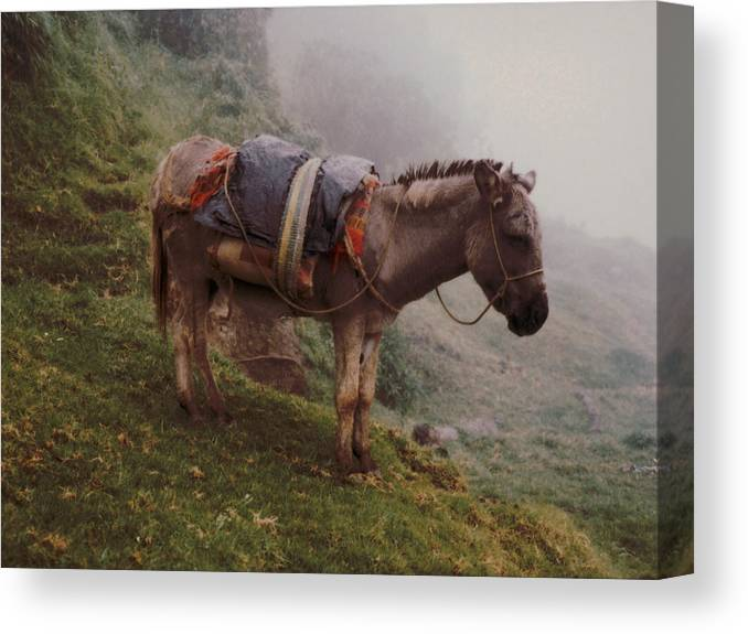 Donkey Canvas Print featuring the photograph Colombian Burro In The Fog by Lawrence Costales