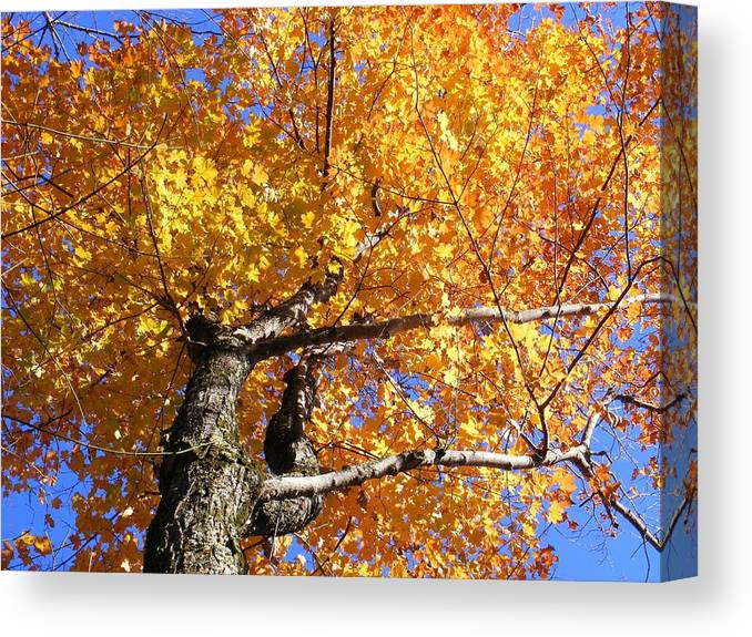 Trees Canvas Print featuring the photograph Crown Fire by Dave Martsolf