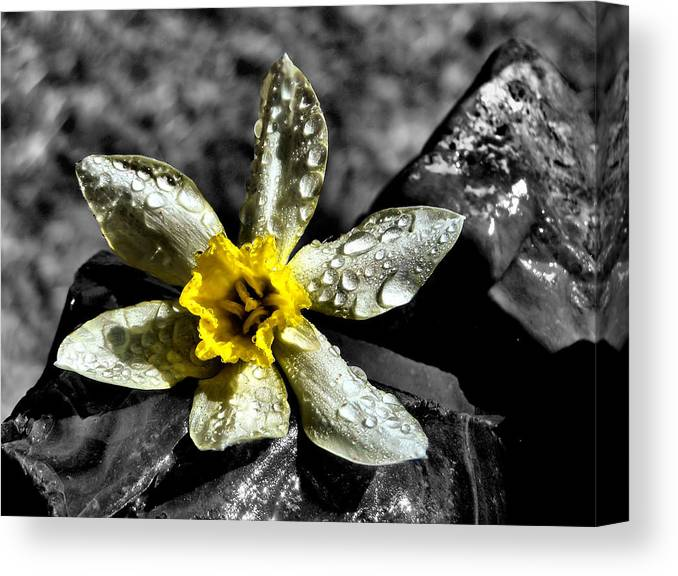 Nature Canvas Print featuring the photograph Drenched In Light by Karen Scovill