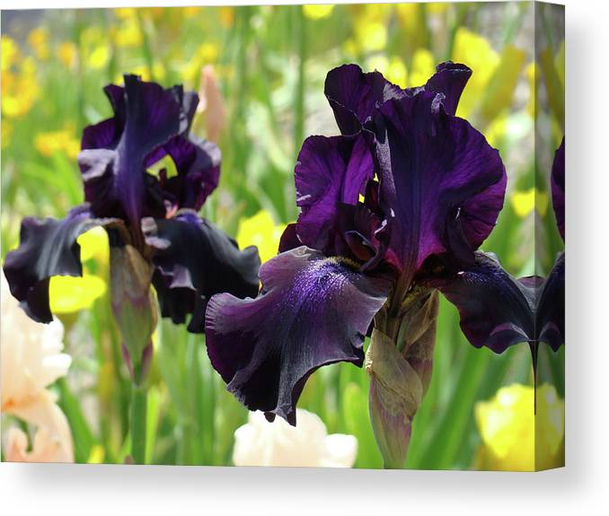 Floral Art Deep Purple Iris Flowers Irises Baslee Troutman Canvas