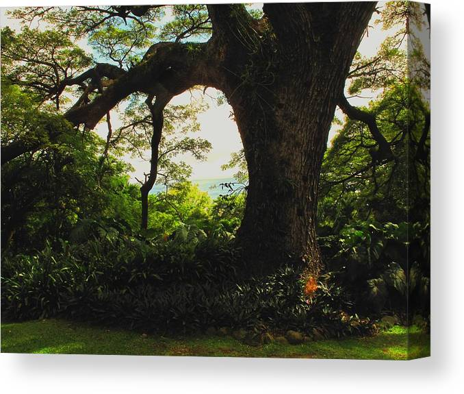 Tropical Canvas Print featuring the photograph Green Giant by Ian MacDonald