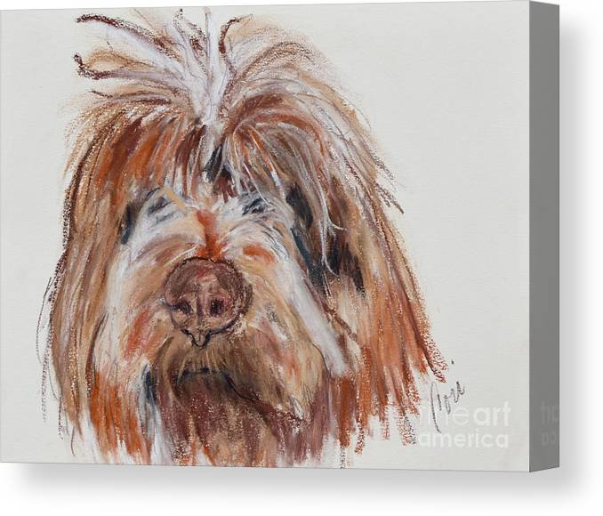 Wirehaired Pointing Griffon Canvas Print featuring the pastel Griffin by Cori Solomon