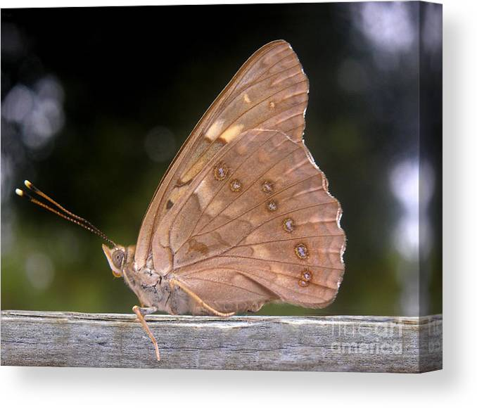 Nature Canvas Print featuring the photograph Nature In The Wild - The Autumn Migrant by Lucyna A M Green