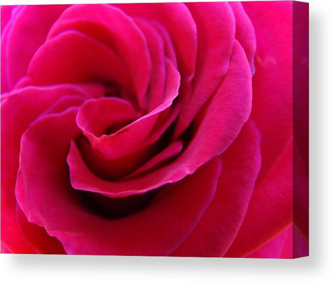 Rose Canvas Print featuring the photograph OFFICE ART ROSE SPIRAL Art Pink Roses Flowers Giclee Prints Baslee Troutman by Patti Baslee
