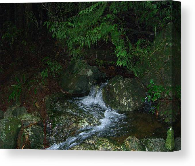 Water Canvas Print featuring the photograph Secret Water by Jim Thomson