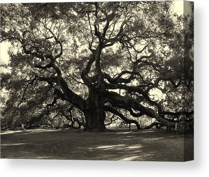 Angel Oak Canvas Print featuring the photograph The Angel Oak by Susanne Van Hulst
