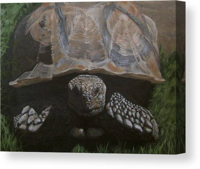 Turtle Canvas Print featuring the painting Tortoise by Karen Ilari