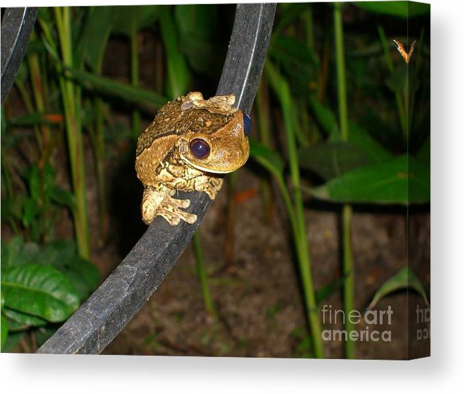 Tree Canvas Print featuring the photograph TreeFrog by Jim Thomson