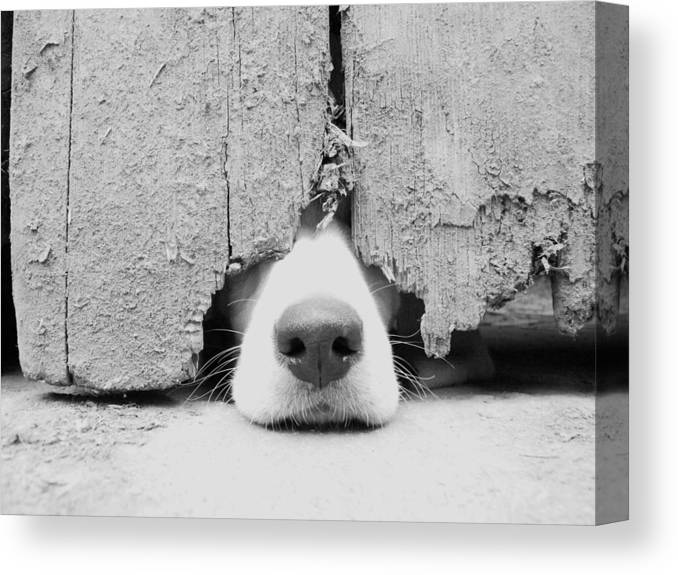 Pets Canvas Print featuring the photograph Anyone Out There by By Jake P Johnson
