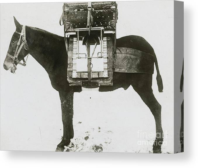 Technology Canvas Print featuring the photograph Donkey Carrying Portable Telegraph by Bettmann