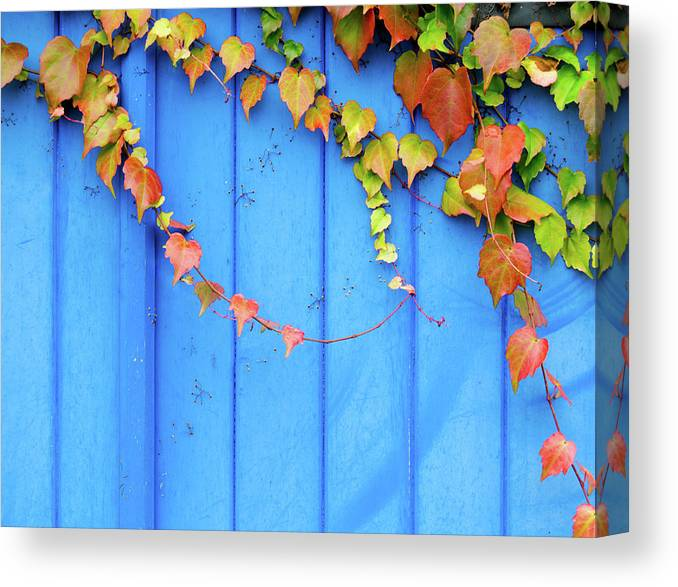 Architectural Feature Canvas Print featuring the photograph Ivy On The Door by Zianlob