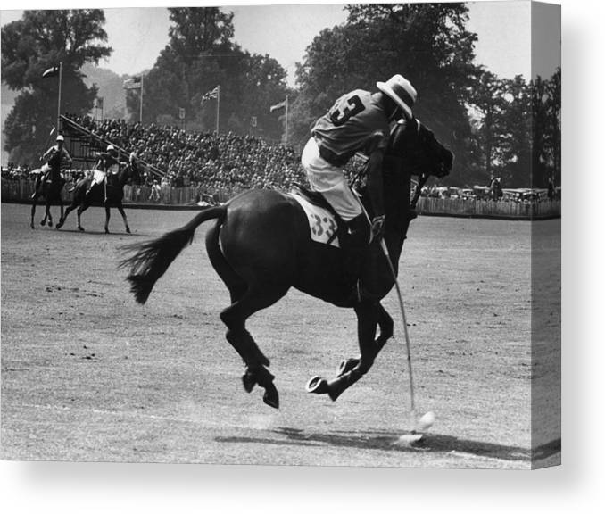 Horse Canvas Print featuring the photograph Polo Pony by Ronald Startup