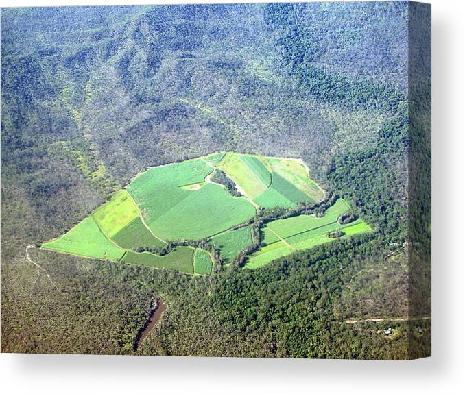 Cairns Canvas Print featuring the photograph Sugar Canefields Carved Out Of Forest by Photography By Mangiwau