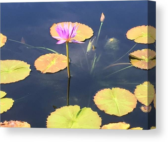 Canvas Print featuring the photograph Tranquil by Gewanda Parker
