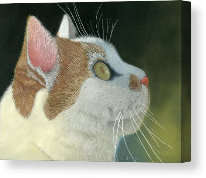 Cat Canvas Print featuring the pastel Cat Portrait Pastel Painting by Dave Nevue
