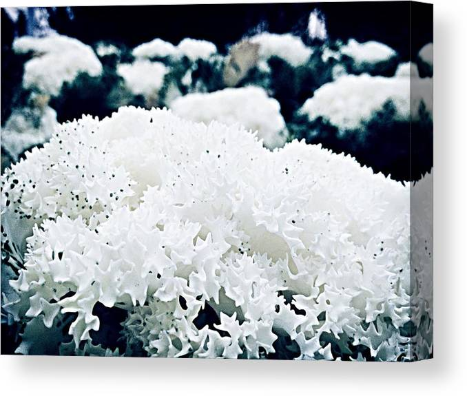 Outdoors Canvas Print featuring the photograph Close Up Of White Plant by Reza Rezvanzadeh / EyeEm
