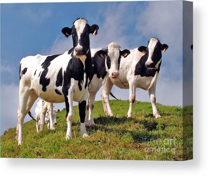 Agriculture Canvas Print featuring the photograph Family portrait by Gaspar Avila