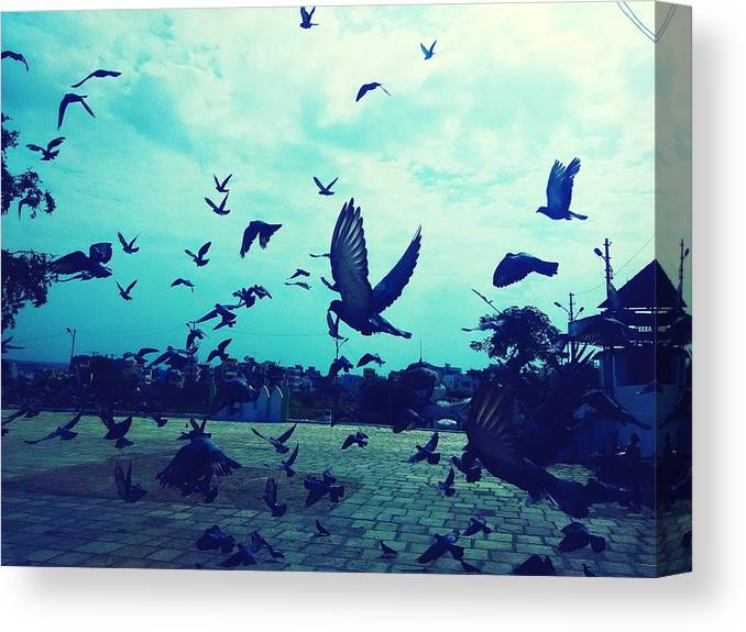 Animal Themes Canvas Print featuring the photograph Flock Of Pigeons Against Sky by Azhar Naveed / EyeEm