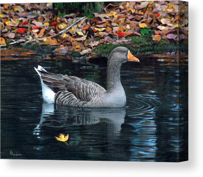 Bird Canvas Print featuring the drawing Great White-fronted Goose by Brent Ander
