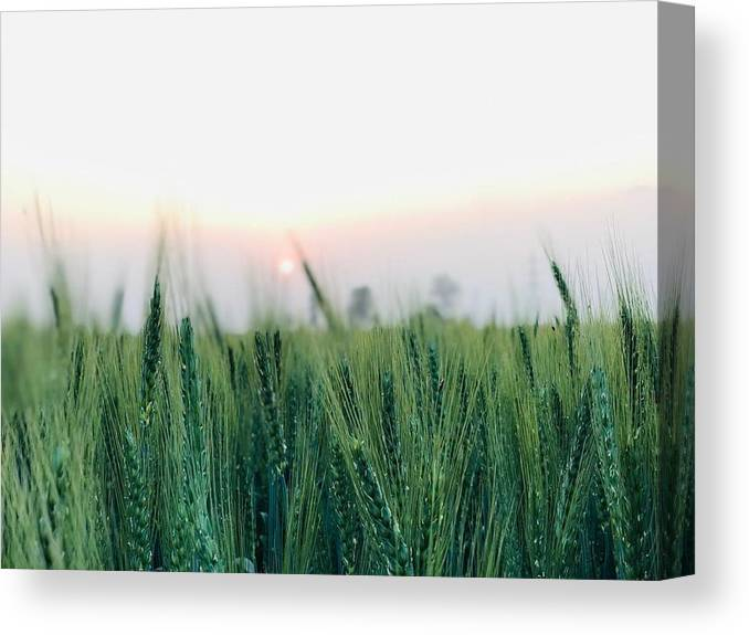 Lanscape Canvas Print featuring the photograph Greenery by Prashant Dalal