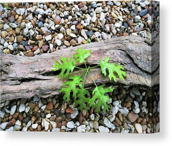 Green Canvas Print featuring the photograph New Life 6 by C Winslow Shafer