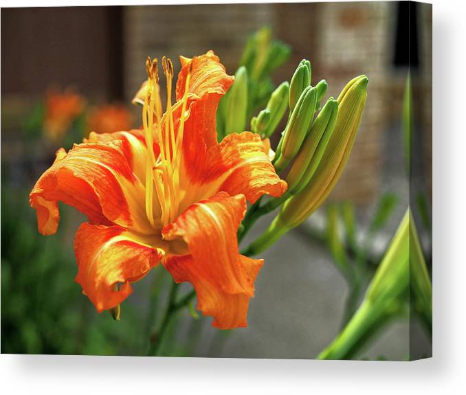 Orange Canvas Print featuring the photograph Spring Flower 14 by C Winslow Shafer