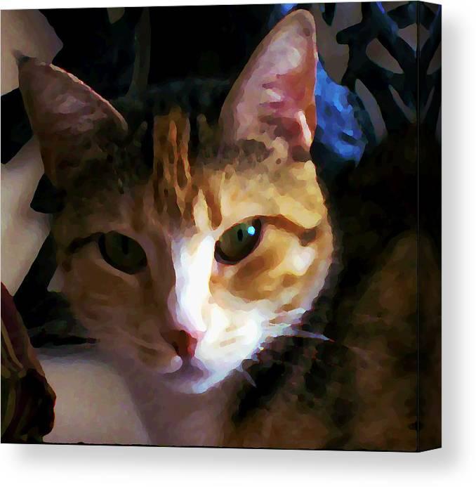 Cat Canvas Print featuring the photograph Sidnie by Joseph Ferguson