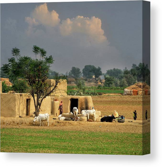 Grass Canvas Print featuring the photograph The Village Of Punjab by Nadeem Khawar