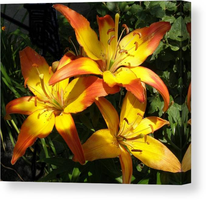 Daylilies Canvas Print featuring the photograph Daylilies Dressed In Their Best by Jeanette Oberholtzer