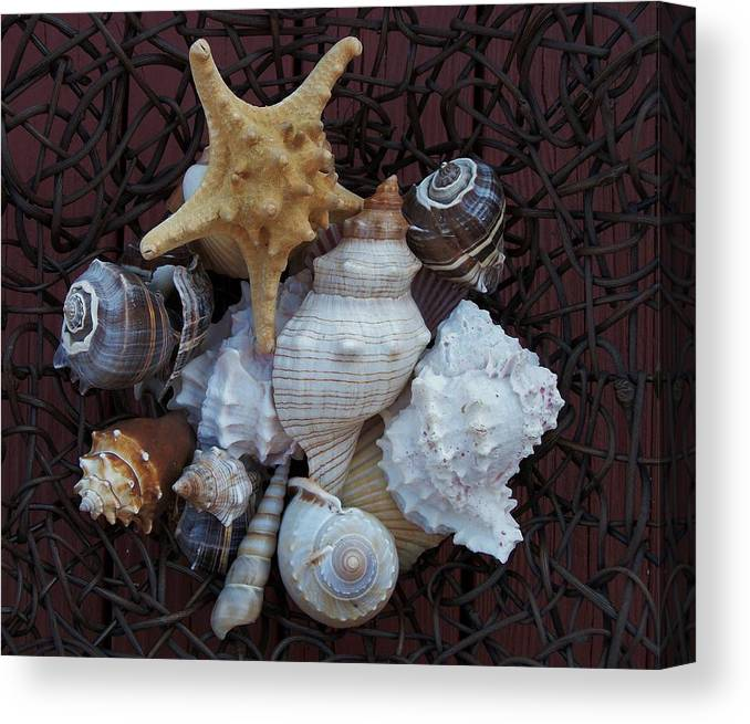 Photo Canvas Print featuring the photograph Shells In A Basket ll by Marsha Heiken